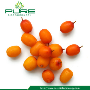 Pure Dry Sea Buckthorn berries / Sea Buckthorn tea