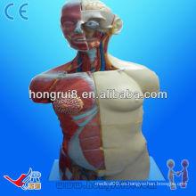 (20parts) Anatomía Anatomía humana Doble sexo torso femenino y masculino 85cm