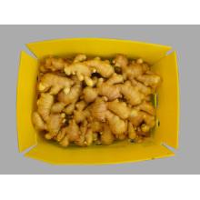 2014 Chinese Fresh Ginger GAP/BRC/FDA