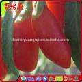 Certified organic goji berry goji berry organic goji guarana