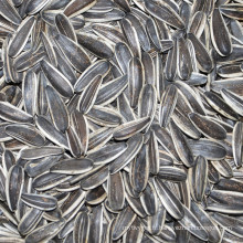 Nouvelle récolte 2016 graines de tournesol graines de type long