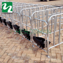 Pig Breeding Equipment Sows Cage Gestation Crate