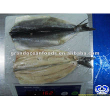 seafood frozen atlantic herring fillet IQF