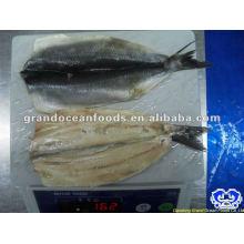 seafood frozen atlantic herring fillet IQF