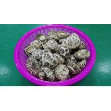 Fornecedor de alimentos secos vegetal branco flor Shiitake cogumelo plantador