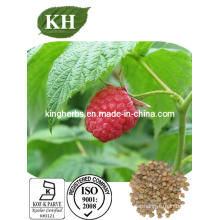Raspberry Extract Raspberry Ketone CAS: 5471-51-2