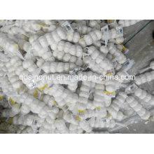 Reine weiße Knoblauch 5p / 200g Mesh Bag