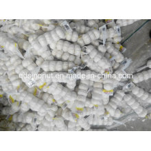 Alho branco puro saco de malha 5p / 200g