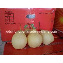 Chinois Ya Pear (32/36/40/44)