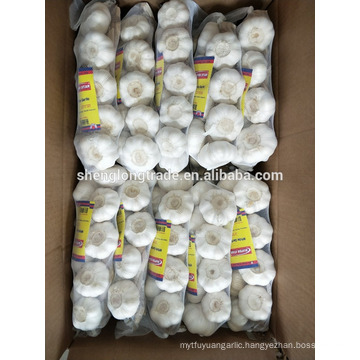 Braid pure white garlic 500g*20/carton China Jinxiang fresh garlic