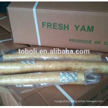 Chinese fresh yam