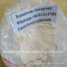 Prueba / testosterona Isocaproate polvo CAS 15262-86-9 ciclo esteroide crudo anabólico