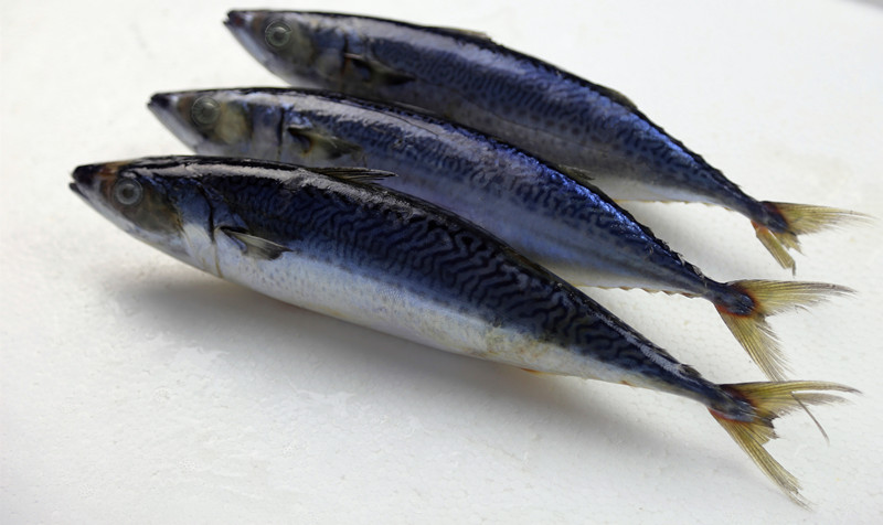 Whole Round Sea Frozen Mackerel Fish