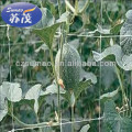 Knotless Hdpe Plant Support Net , Anti UV Agriculture Cucumber Net