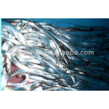 frozen light-catch ribbonfish Indonesia