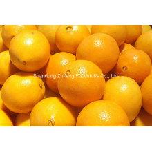 Chinesische frische Navel Orange in hoher Qualität