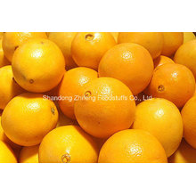 Chinese Fresh Navel Orange in High Quality