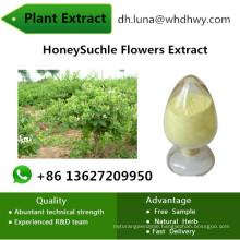 Enhancing Immune Function Honeysuchle Flowers Chlorogenic Acid