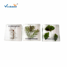 Amostra de três plantas preciosas