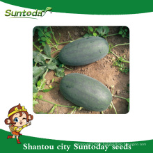 Suntoday ice box Asian vegetable hybrid F1 agriculture black watermelon vegitable export import heirloom seeds company(11015)