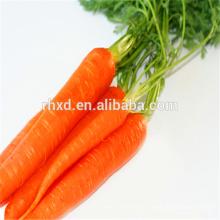 Свежий массовый экспорт моркови из Китая