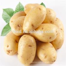 Chinesische Holland-Samenkartoffel zu gutem Preis