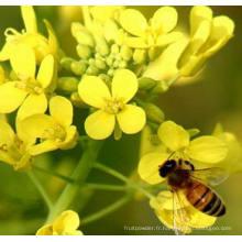 15% de pollen d'abeille de protéines