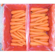 Свежие органические морковь на продажу из Китая