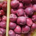 Delicioso highland huaniu apple