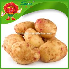 Batata fresca exportador de alta qualidade batata batata amarelo orgânico batata