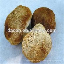setas de Hericium erinaceus secas