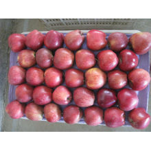 China apple fresh fruit wholesale fruit apple in good price