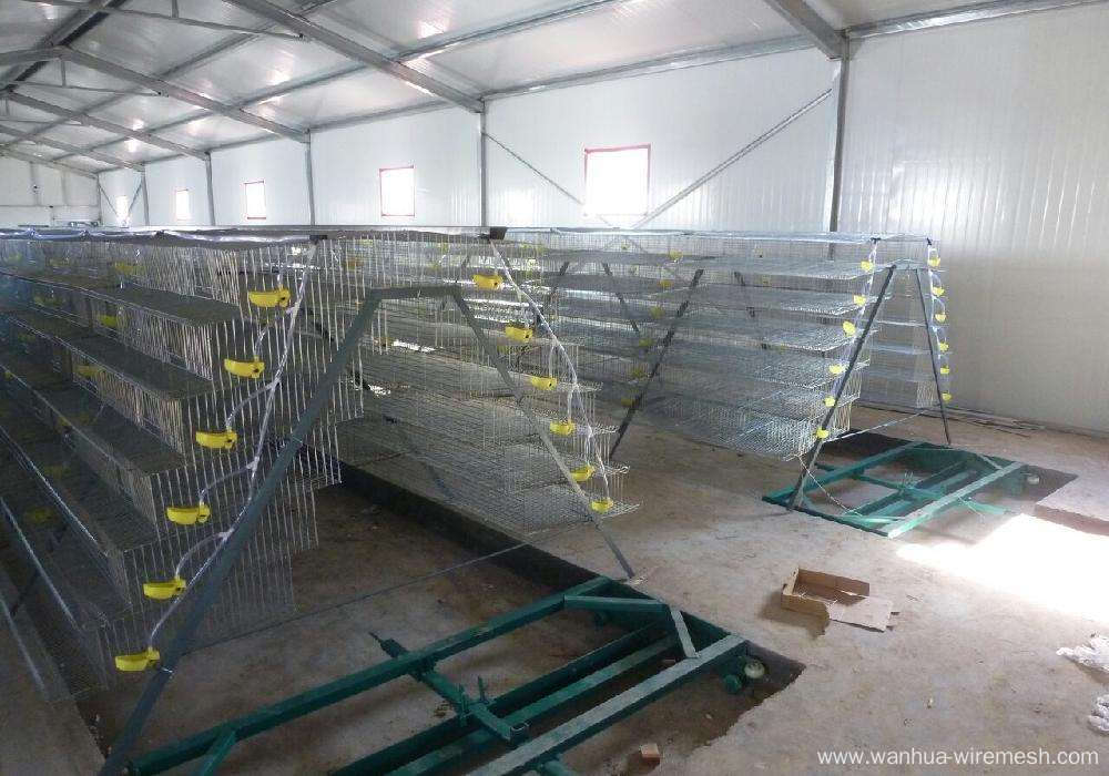 Commercial quail layer cage