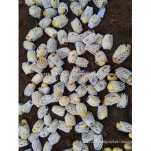 Fabrication de la Chine Légumes biologiques de pommes de terre fraîches à dubai