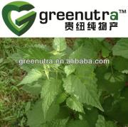 Agastache rugosus extract