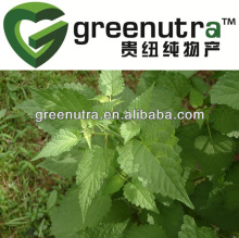 Agastache rugosus extract