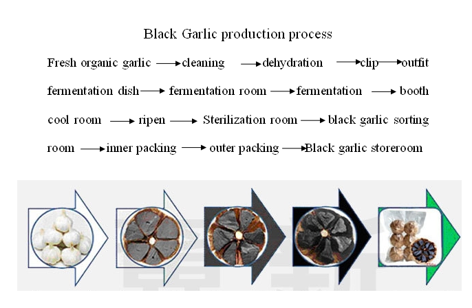 black garlic fermentation process