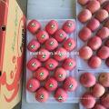 Yantai Fresh Red Fuji Apple-Stripe