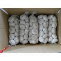 Pure White Garlic from jinxiang