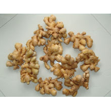 Chinese fresh ginger