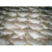 Gefrorener Fisch (Lederjacke) gekühlt IQF