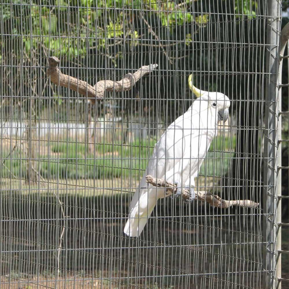Edelstahl-geschweißter Vogelkäfig-Maschendraht-China-Hersteller