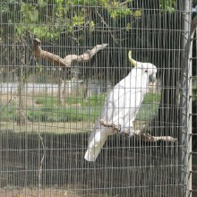 Stainless Steel Welded Bird Cage Wire Mesh