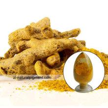 Fabrik Versorgung Kurkuma natur gelb 3 Curcumin