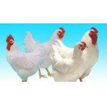 Цыплят бройлеров кормовой добавки (ферменты)