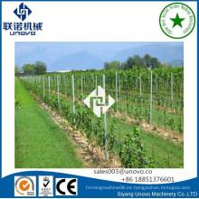 Poste de uva unovo para viña