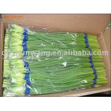 2012 fresh garlic stem