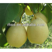 wholesale asian pear with great price