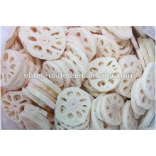 Culture des tranches de légumes-racines de lotus congelées IQF