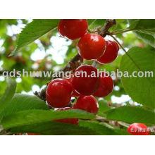 Cereza roja fresca